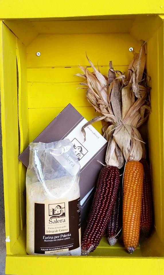 Giallo Polenta farina salera